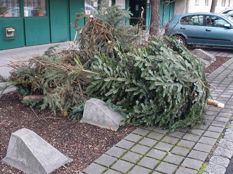 Weihnachtsbaum achtlos entsorgt